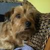 rustydog