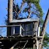 Treetop33
