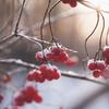 Bumbleberry123